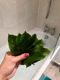 Pomelo leaves